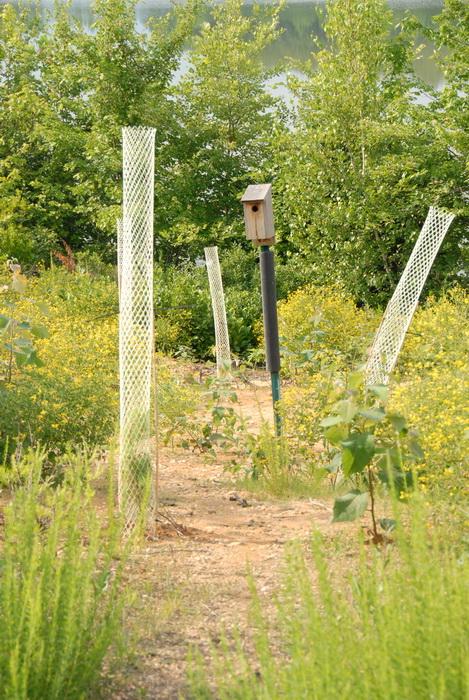 bird feeder, mesh, overgrown, trees, water, overtaken by nature center