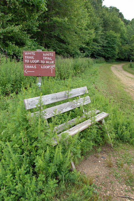 bench, dirt road, grass, overgrown, sign, trees, overtaken by nature center