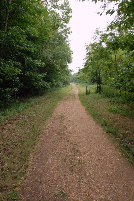 dirt path, trees, grass