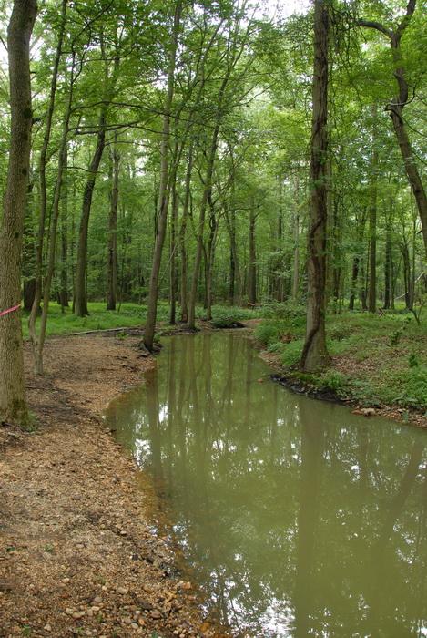 grass, rocks, shoreline, stream, trees, vines, water, woods