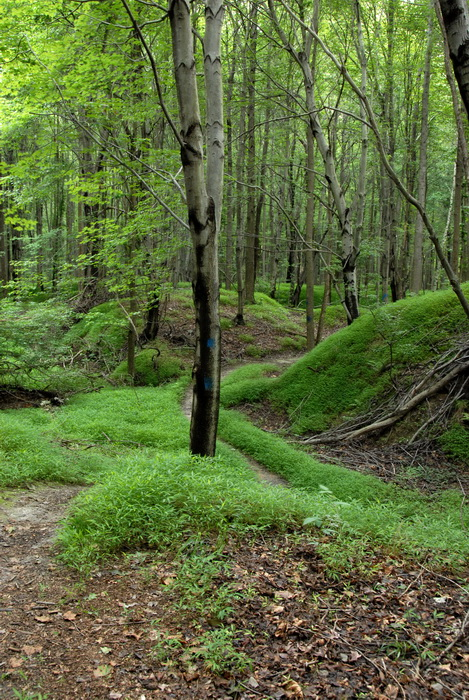 grass, ground cover, moss, trail, trees, woods