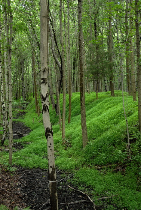 grass, ground cover, moss, mounds, trail, trees, woods