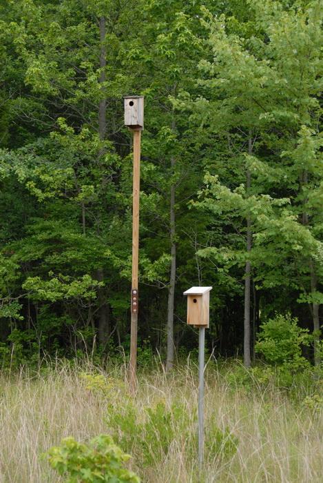 bird feeders, grass, overgrown, trees, overtaken by nature center