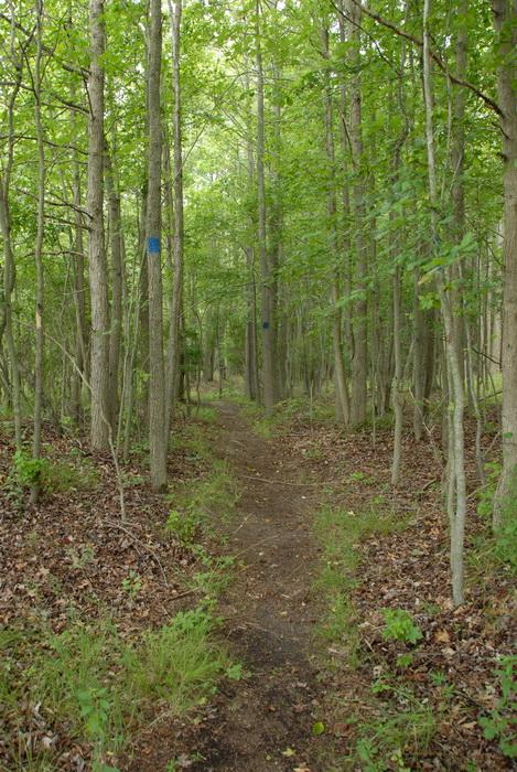 trail, trees, blaze