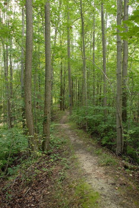blaze, ground cover, trail, trail blaze, trees, woods