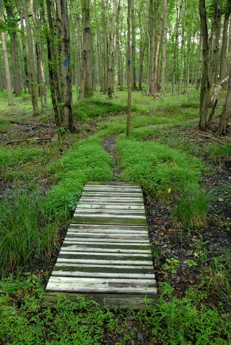 blaze, ground cover, trail, trees, wood bridge, woods