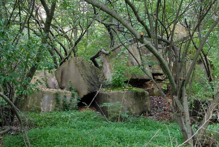 blaze, concrete, concrete blocks, ground cover, ruins, trees, woods