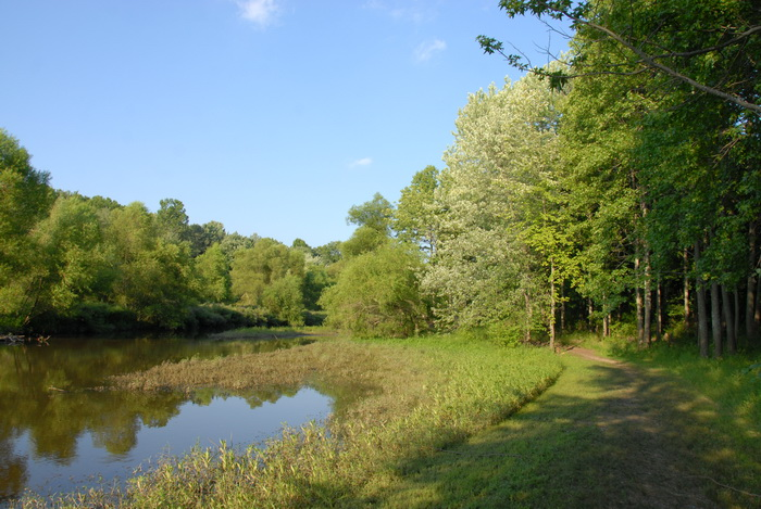 water, pond, trees, blue sky and, path, weeds, marsh
