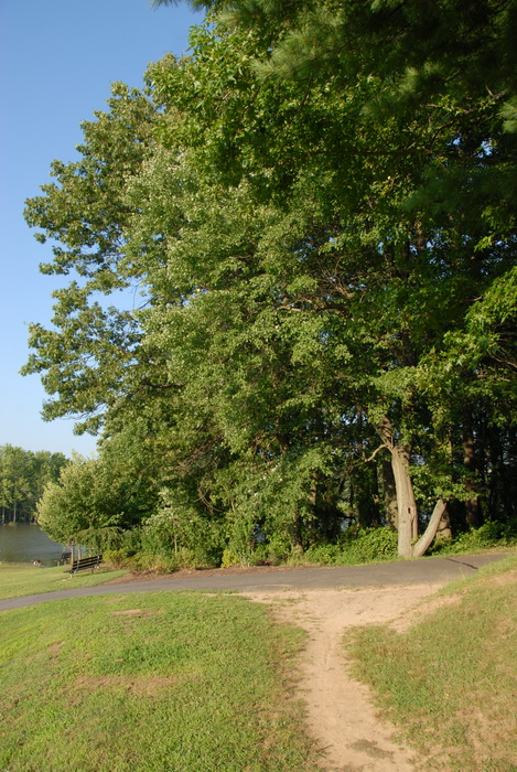 dirt path, paved path, walkway, trees, blue sky and, grass