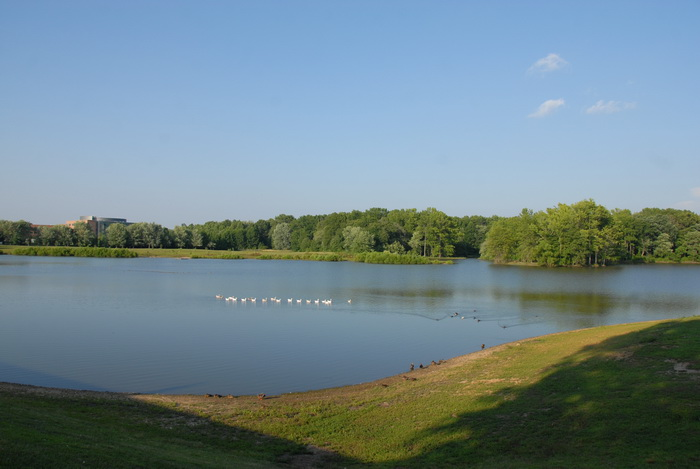 water, pond, ducks, hill, grass, trees, blue sky and