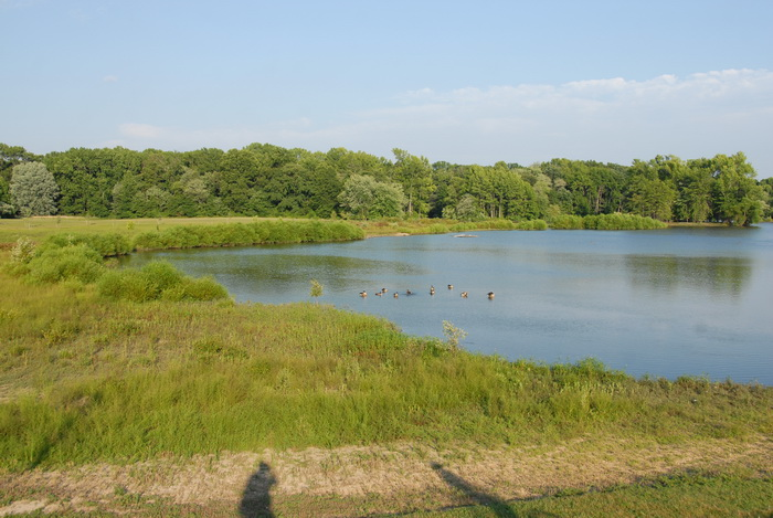 pond, water, marsh, grass, trees, blue sky and
