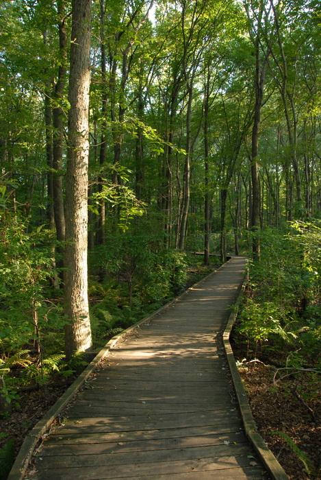 boardwalk, trees