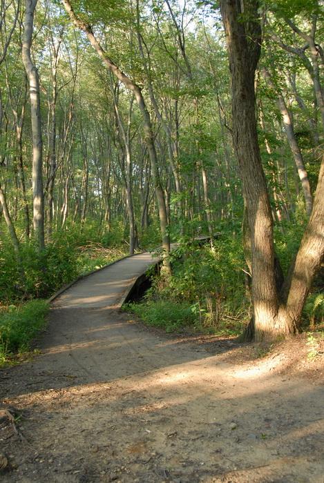 boardwalk, dirt path, path, trees