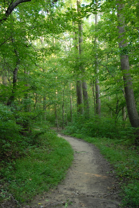 dirt path, grass, trees, woods