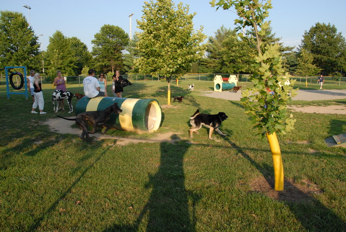 dog park, dogs, pets, grass, shadow, trees, people, obstacle, blue sky and