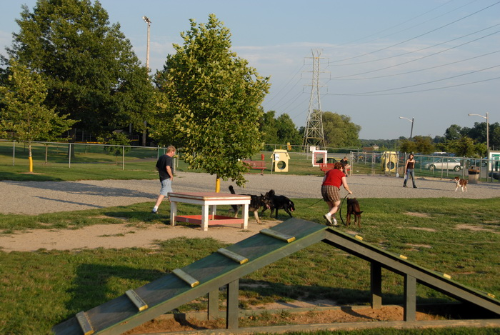 blue sky and, dog park, dogs, grass, obstacle, people, pets, shadow, trees