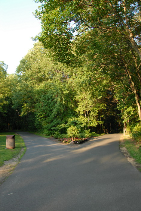 split, fork, paved path, trees, woods, grass, garbage can