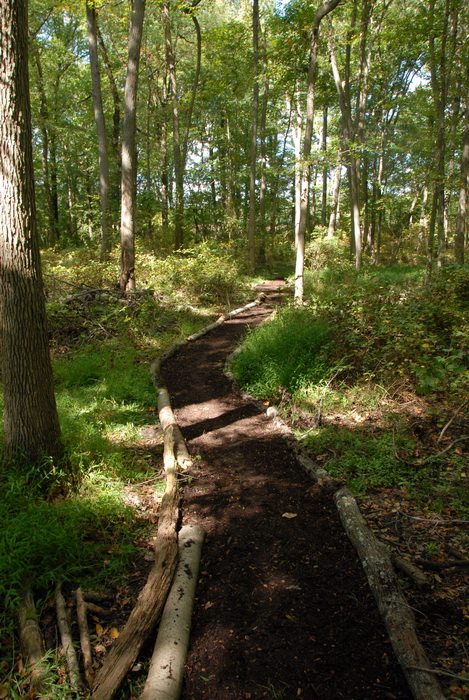 path, trail, trees, woods, S.M.A.R.T.