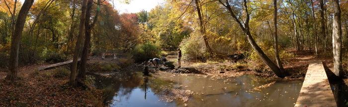 panoramic, woods, trees, ground cover, river, water, bridge, trail maintenance