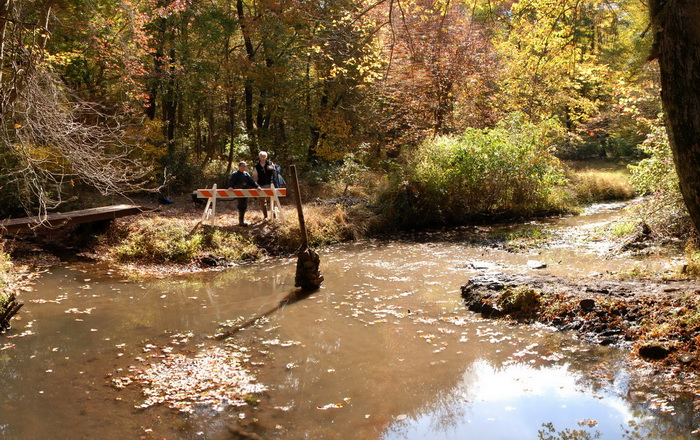 trail maintenance, barrier, woods, water, river, tree, ground cover