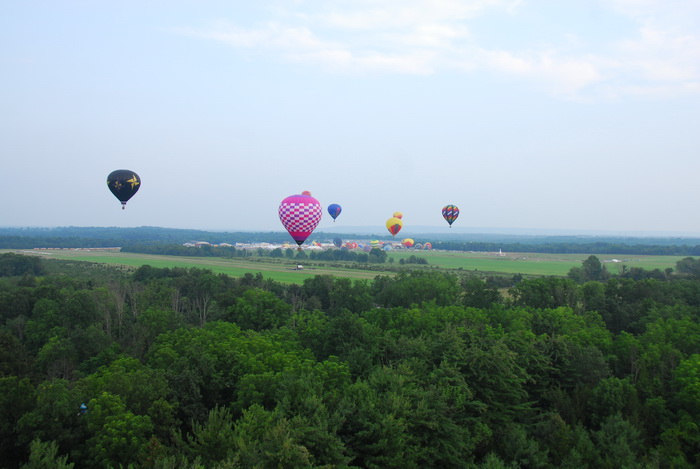 trees, hot air balloon, floating, flight, fieds