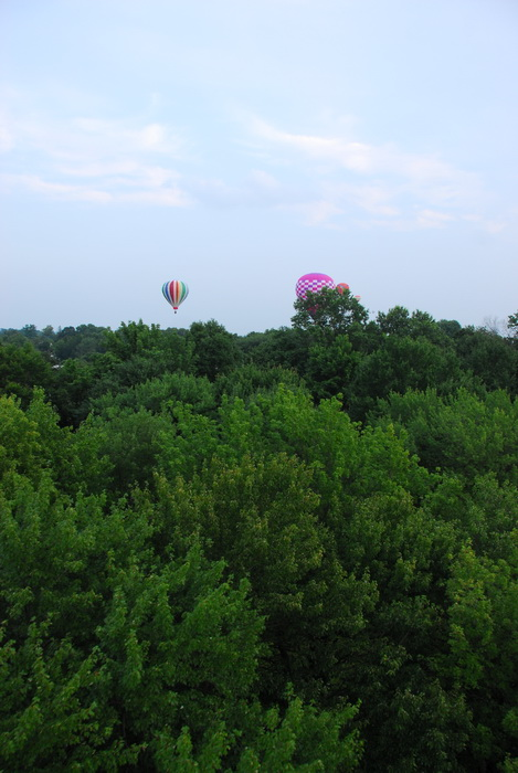above the trees, floating, hot air balloon, trees, woods
