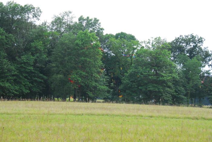 field, grass, trees, ht air balloon