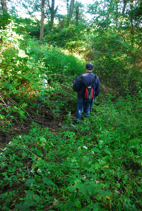 JORBA, S.M.A.R.T., leaves, trail day, trail maintenance, trees, woods, undergrowth