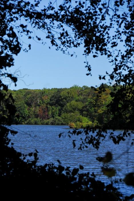 trees, leaves, woods