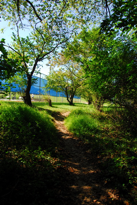 leaves, path, trails, trees, woods, undergrowth