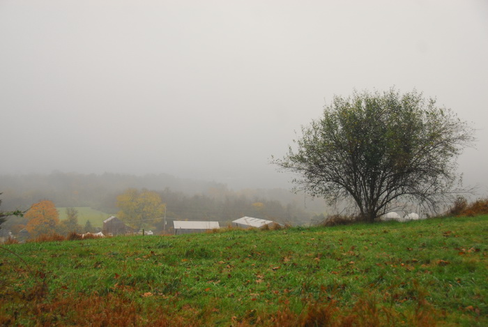 clouds, fog, mist, grass, field, bush