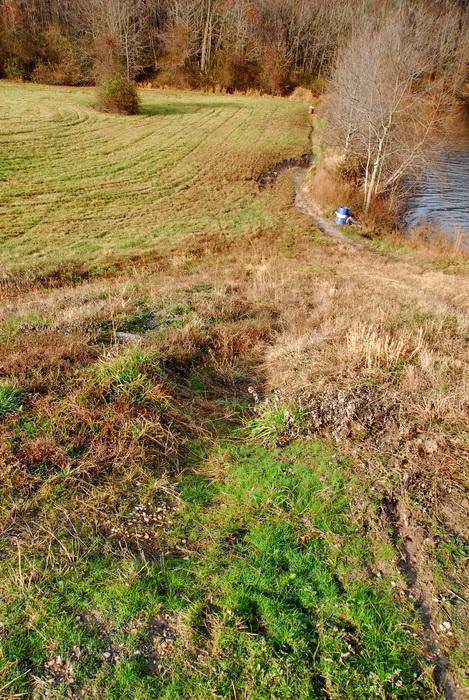 field, grass, trees, water