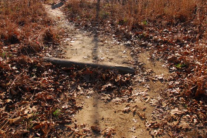 trail, bike path, dirt path