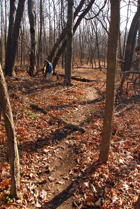 trees, woods, trail, bike path, dirt path