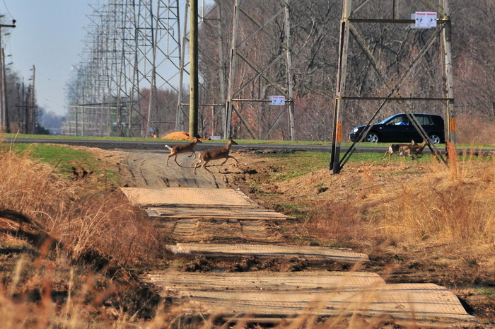 car, deer, grass, road, trail, power lines