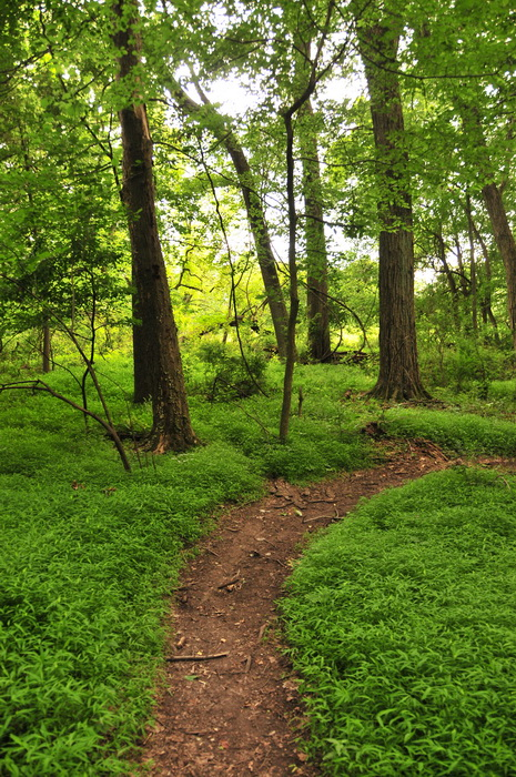 dirt, green, ground cover, path, trail, trees, turn, Core Creek Park - PA