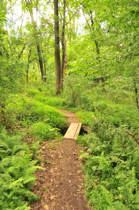 Core Creek Park - PA, bridge, dirt, green, ground cover, path, trail, trees