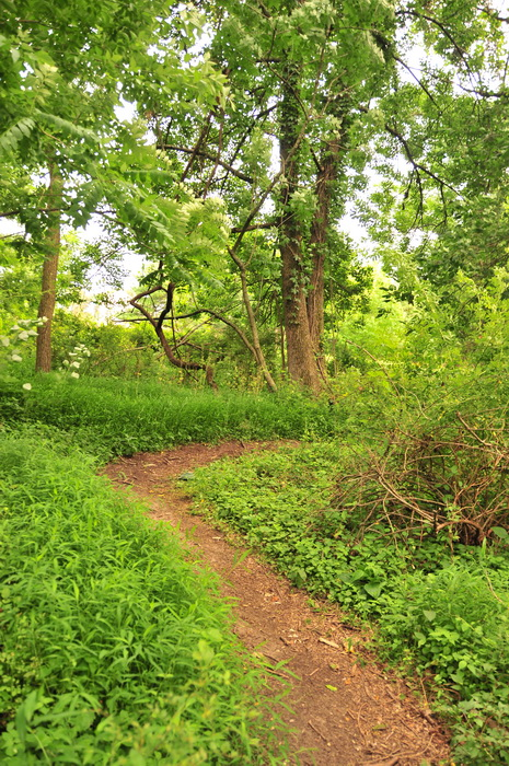 brush, dirt, green, ground cover, path, trail, trees, turn, Core Creek Park - PA