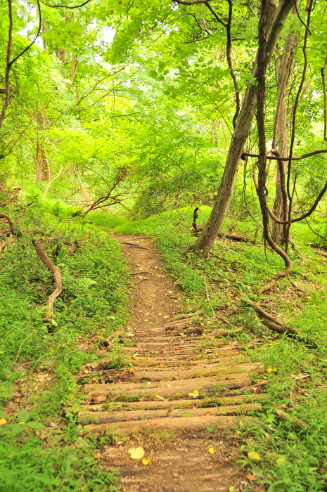 dirt, green, ground cover, log bridge, path, trail, trees, Core Creek Park - PA