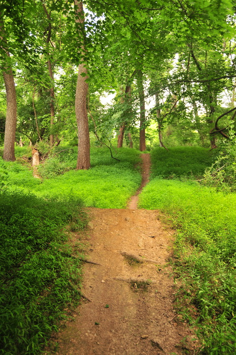 dirt, green, ground cover, hills, path, roots, trail, trees, Core Creek Park - PA