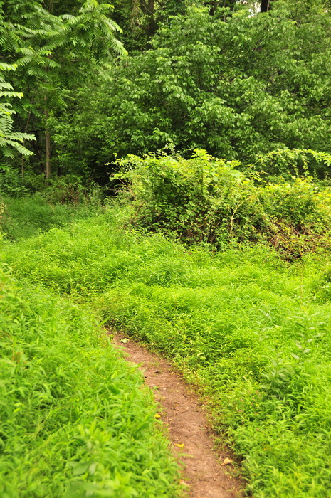 dirt, green, ground cover, over grown, path, trail, trees, Core Creek Park - PA