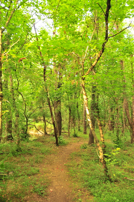 Core Creek Park - PA, dirt, green, ground cover, path, trail, trees