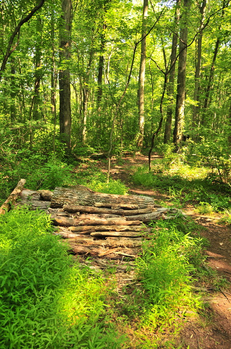 dirt, log rollover, path, trail, trees, wood pile