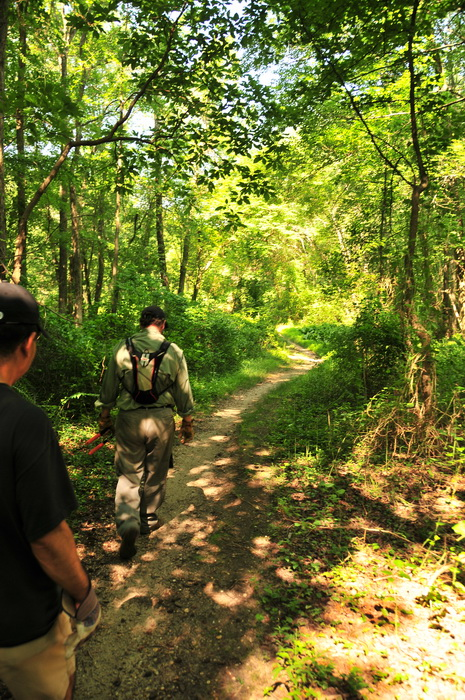 dirt, path, people, trail, trail maintenance, tree