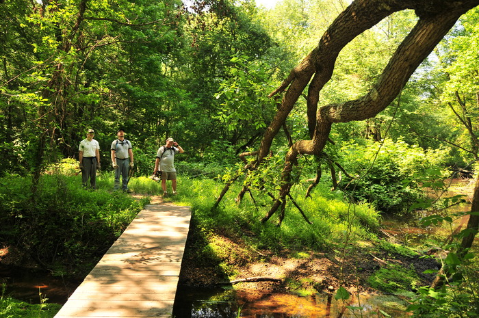 grass, ground cover, people, stream, trail maintenance, trees, water