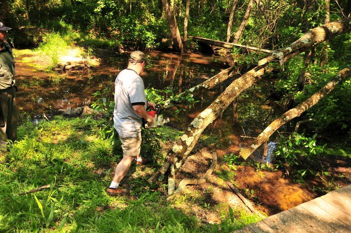 bridge, cutting, down tree, stream, water