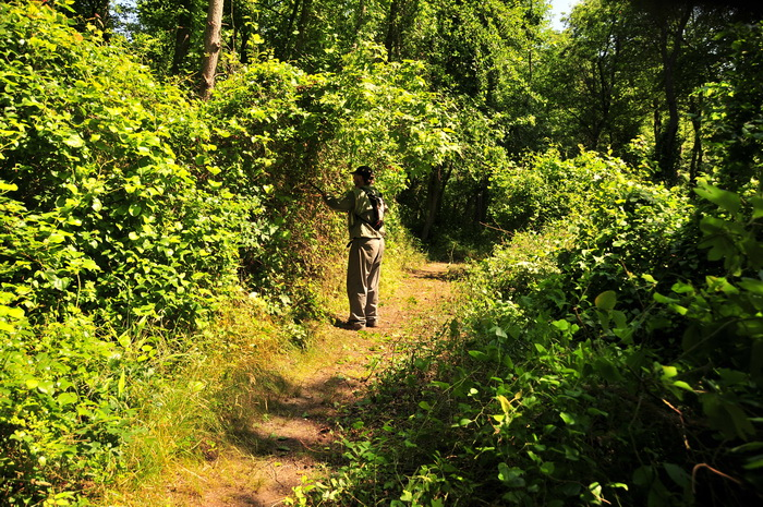 SMART, dirt, path, trail, trail maintenance, trees, woods