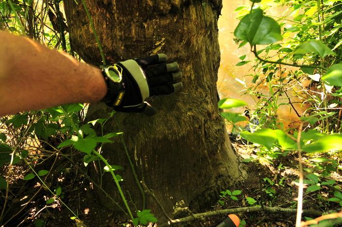 hand, beaver damage, tree, water