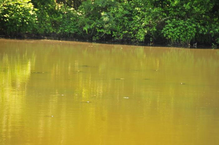 water, pond, lake, turtle