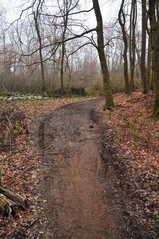 fog, marsh, muddy trail, trail, wet, wide, woods, Mercer County Park, JORBA Trail Day, March 2012